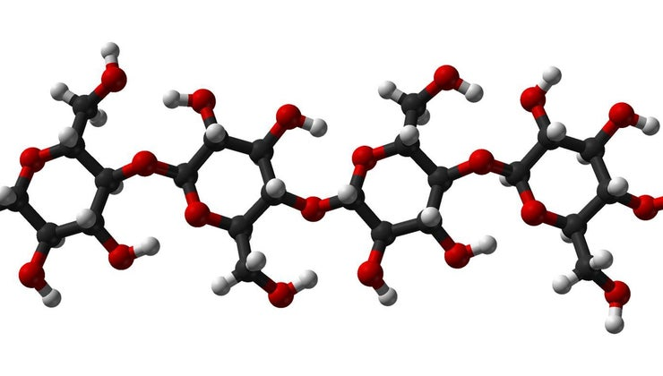examples-polysaccharides