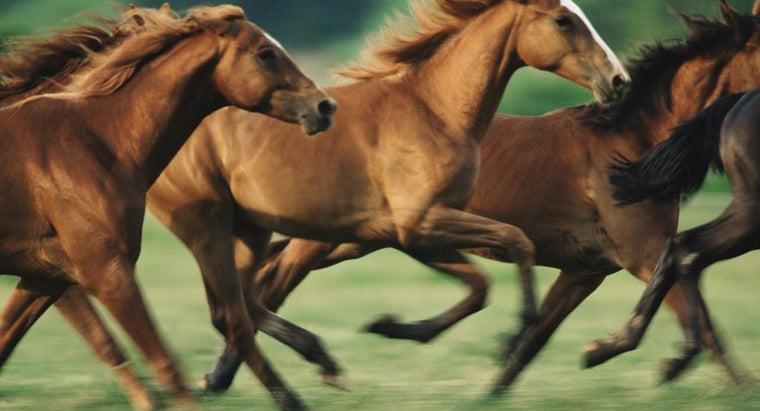 fast-can-horses-run