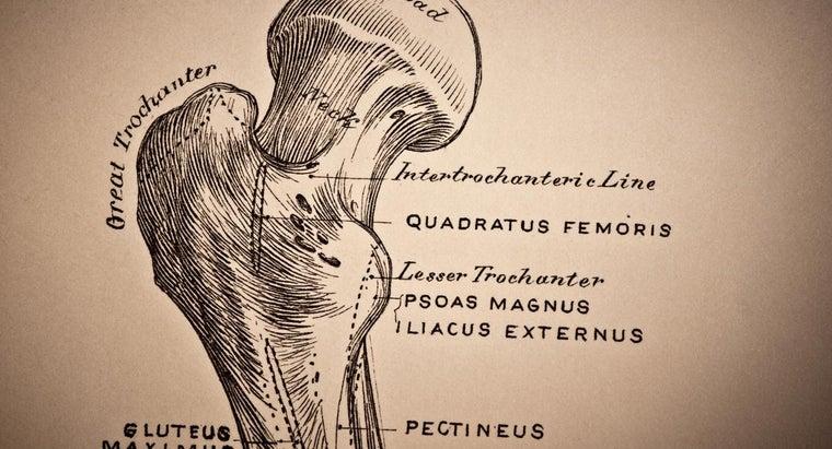 femoral-neck-osteopenia