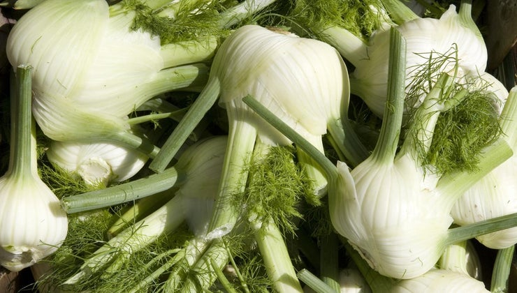 fennel-taste-like