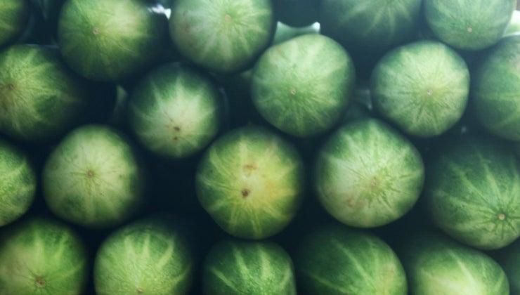 fertilizer-cucumbers