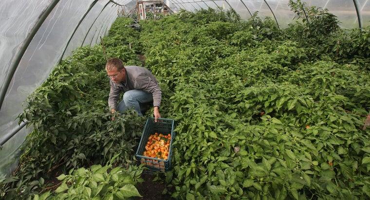 fertilizer-peppers