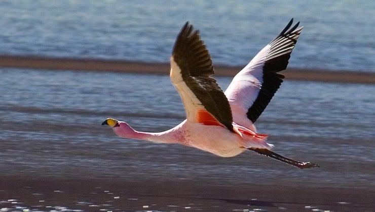 flamingo-food-chain