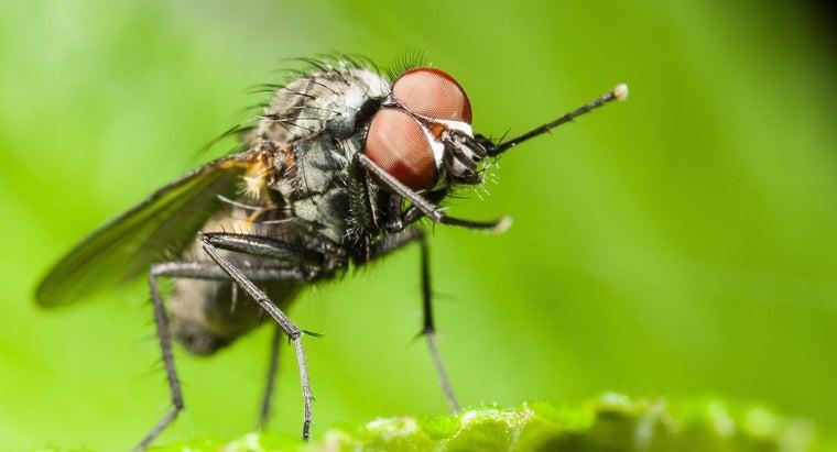 flies-sleep