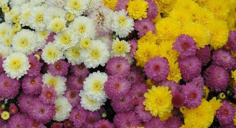 flowers-bloom-september