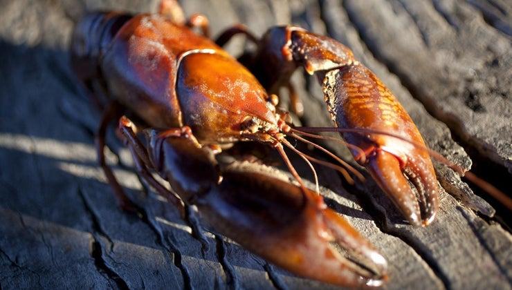 freshwater-crawdads-eat