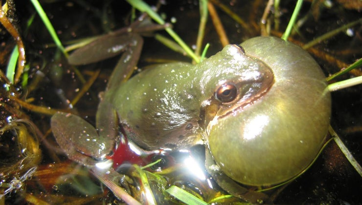 frogs-croak-after-rains