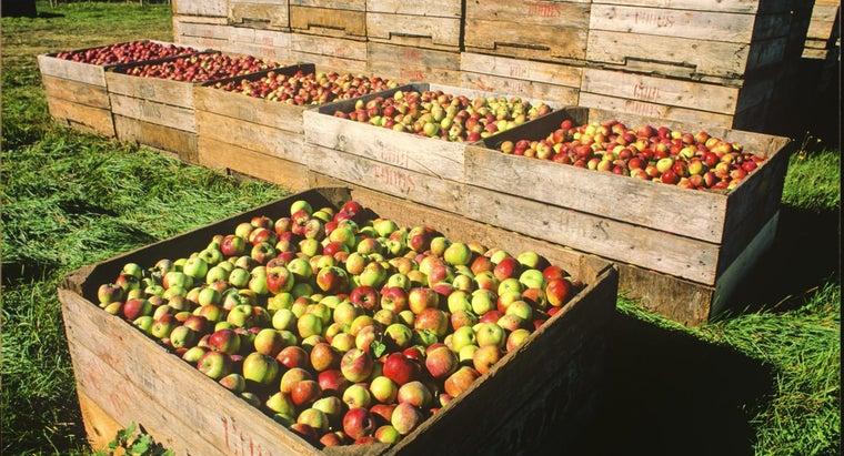 fruit-eaten-world
