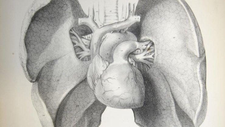 function-bronchus