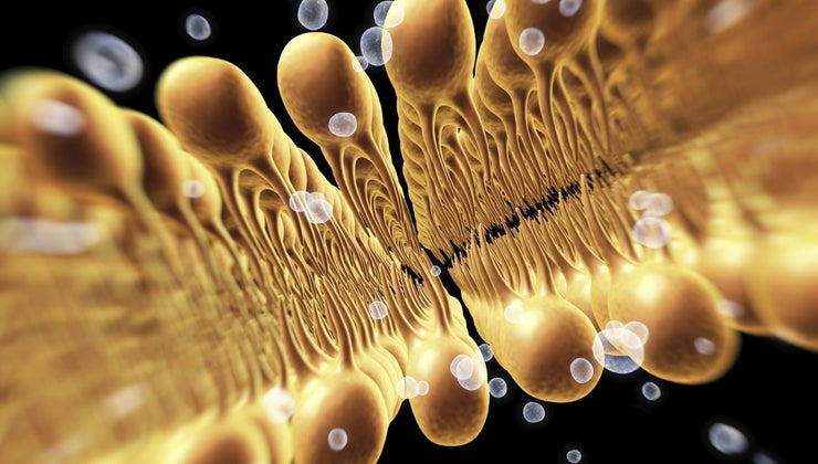 function-cell-membrane
