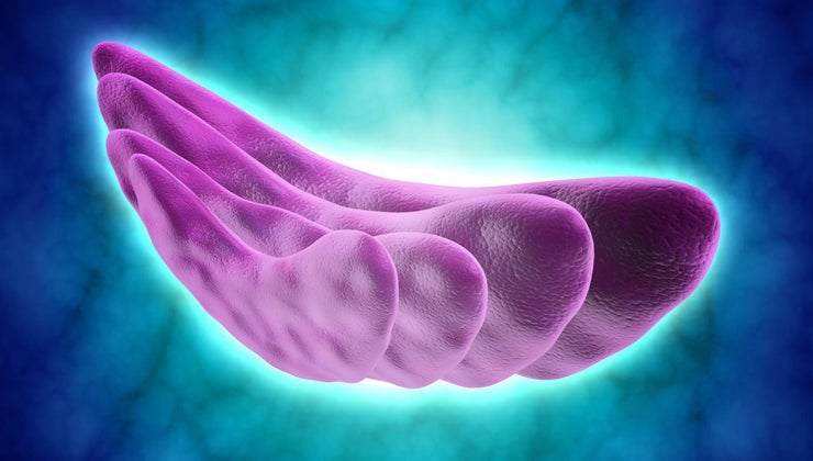 function-golgi-vesicles