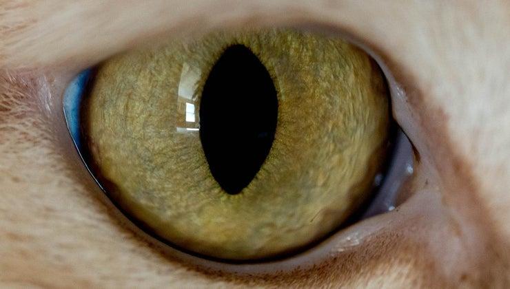 function-lens