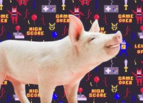 8-Bit Oinkers: These Tech-Savvy Pigs Are Mastering Video Games