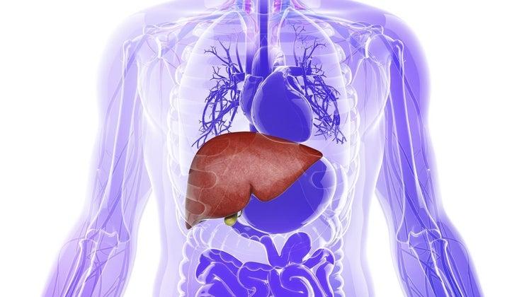 glycogen-stored-body