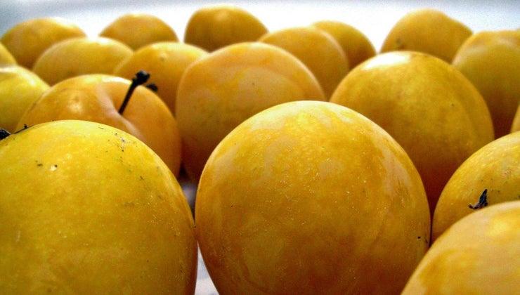 golden-plum