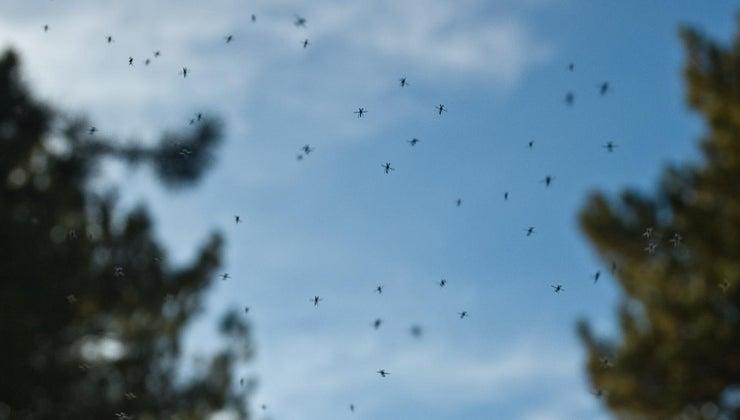 good-home-remedy-kill-gnats