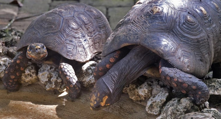 group-turtles-called