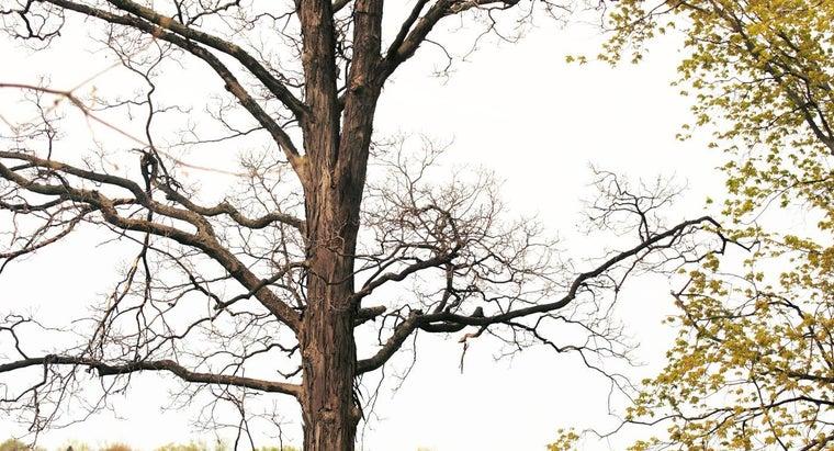 hickory-trees-grow