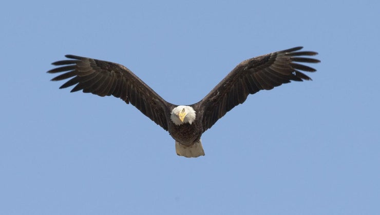 high-can-eagle-fly