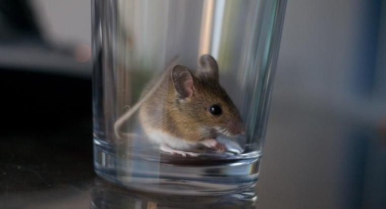 home-remedies-kill-mice