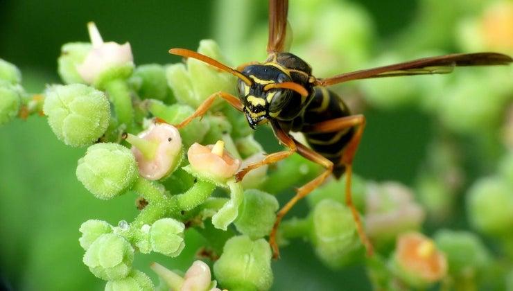 home-remedies-kill-wasps
