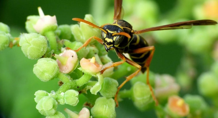 home-remedies-kill-wasps