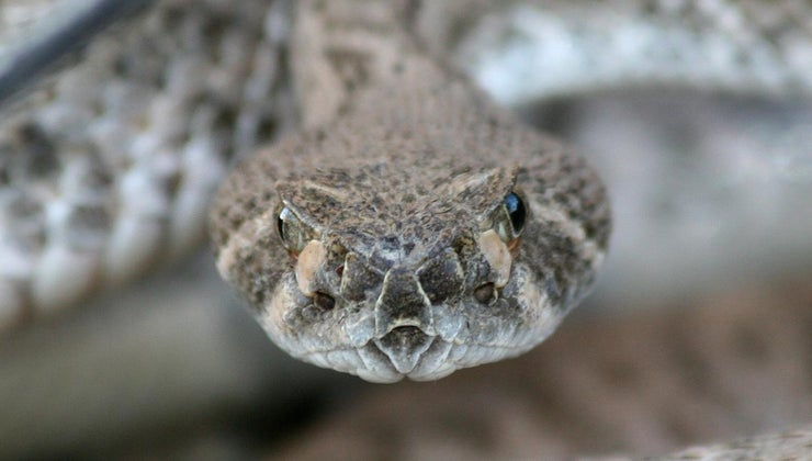 home-remedy-keeping-snakes-away