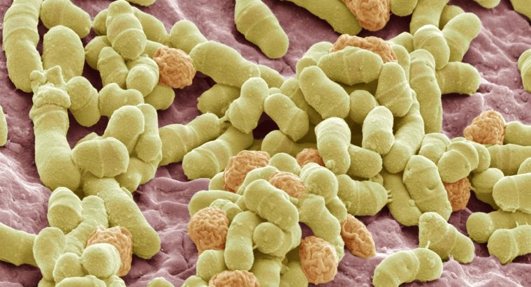 home-remedy-skin-fungus