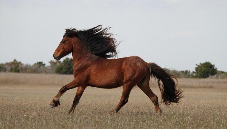 horse-live