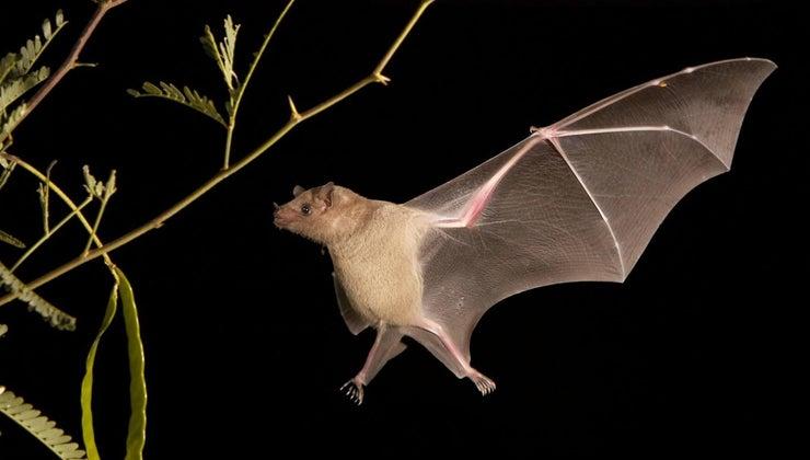 bats-navigate