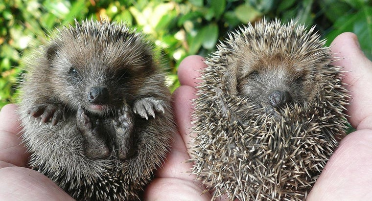 rid-hedgehogs