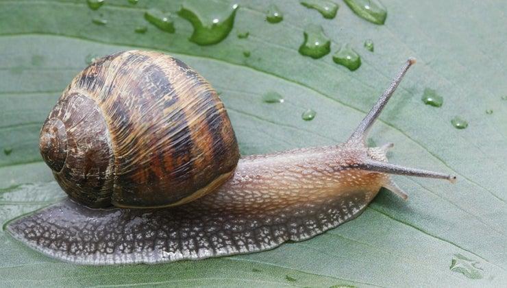 snails-move