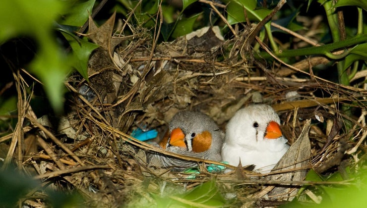 long-bird-leave-nest