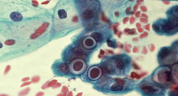 long-chlamydia-clear-up