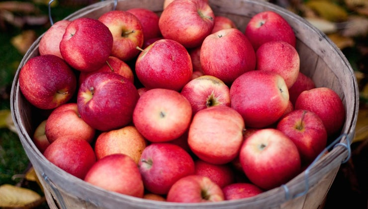 many-apples-create-1-gallon-apple-cider