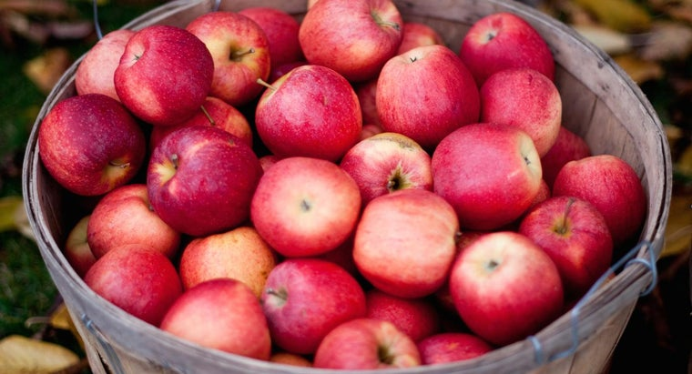 many-apples-create-1-gallon-apple-cider