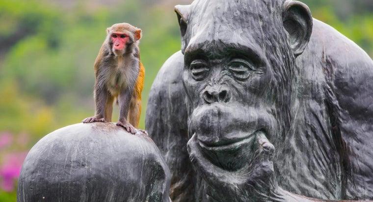 much-monkeys-weigh