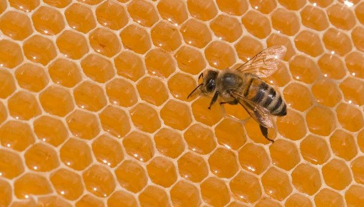 much-bee-weigh