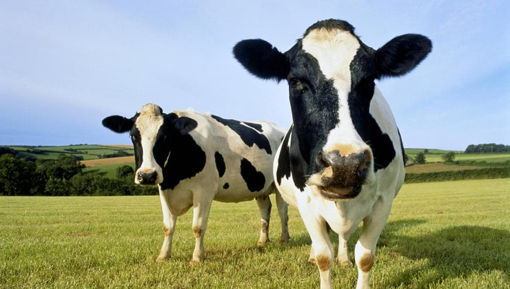 much-one-gallon-milk-weigh-pounds