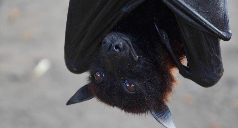 keep-bats-away