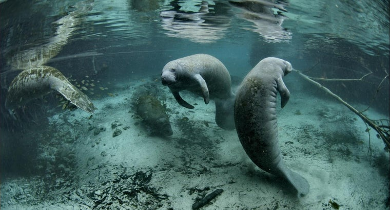 important-save-endangered-animals