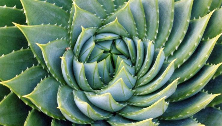 interesting-fibonacci