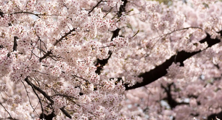 japan-s-vegetation-like