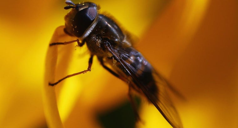 keep-flies-away-outside