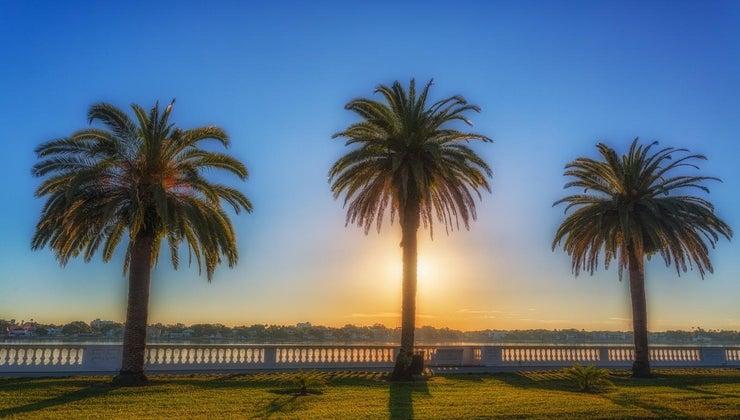 kill-palm-tree