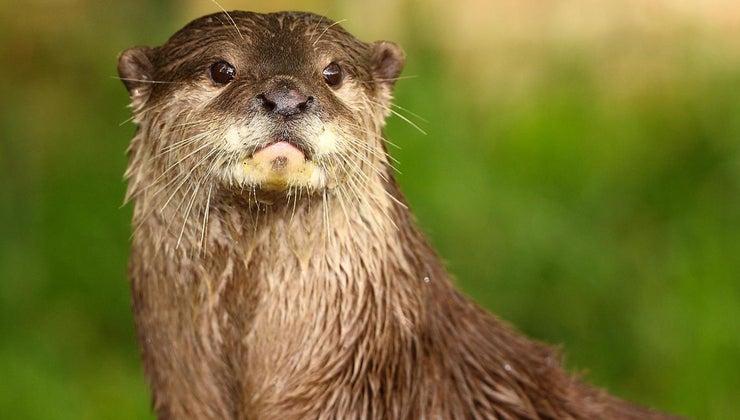 kinds-animals-live-rivers