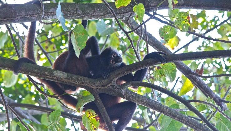 kinds-animals-live-trees