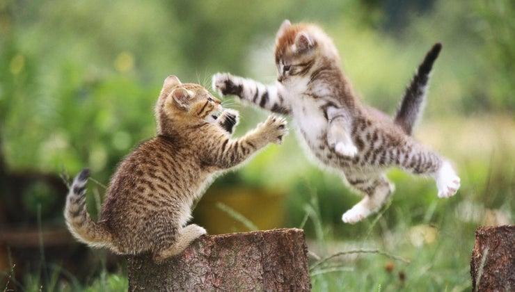 kittens-live