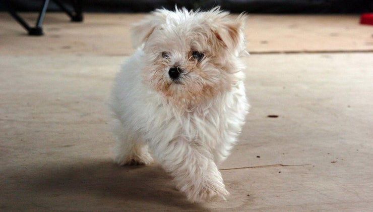 korean-dog-names