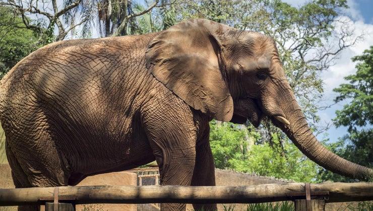 largest-animal-rainforest